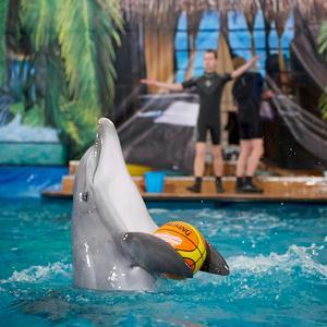 Дельфинарии, океанариумы Заречья