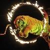 Цирки в Заречье