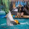 Дельфинарии, океанариумы в Заречье
