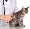 Ветеринарные клиники в Заречье